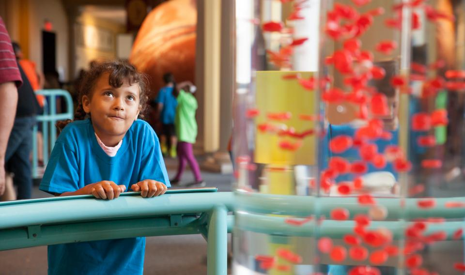 Kid looking at an exhibit